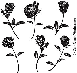 Rose flower vector graphics