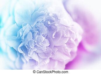 Rose flowers background/ vintage spring time