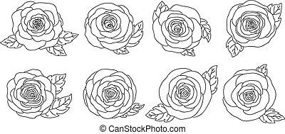 Rose flowers design isolated on white background vector illustration