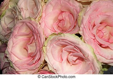 Rose Flowers - Four roses