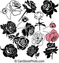 rose flowers isolated on white back