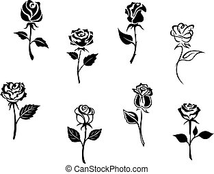 Rose flowers set isolated on white background for design and...