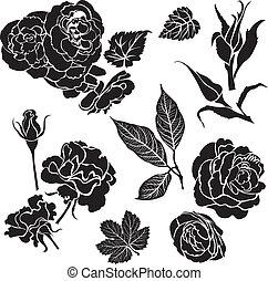 Rose flowers - Set of black floral design elements - rose ...
