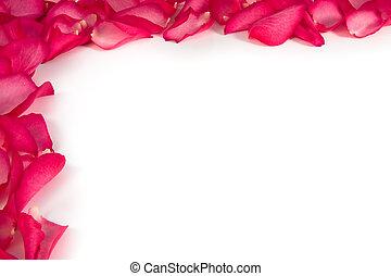 rose, fond blanc, pétales