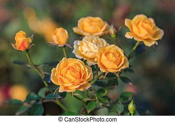 rose, fond jaune