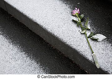 Rose for memory on funeral,finland