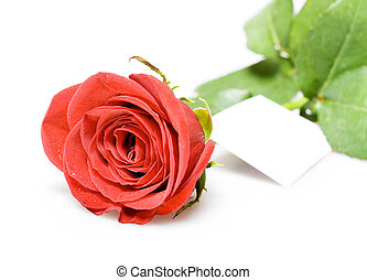 rose for valentine\'s day