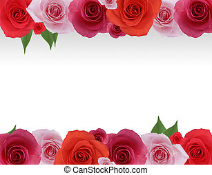 Rose Frame - High resolution flower frame graphic.