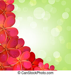 rose, frangipanier, cadre, bokeh