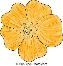 rose générique, croquis, fleur, coloré