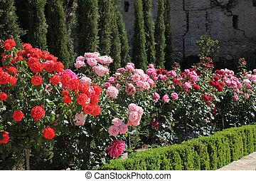 Rose Garden Alhambra Granada - the rose garden in the Alta...