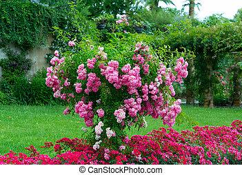 rose, garden., fleurs, arbre