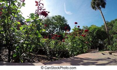Rose garden Florida Washington Oaks - Florida Rose garden...