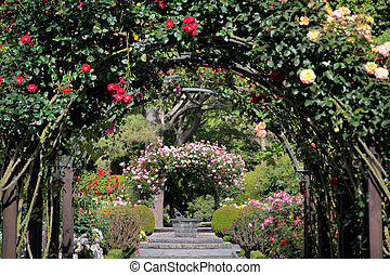 Rose garden in the Botanic Gardens, Canterbury, South...