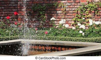 rose garden with a fountain