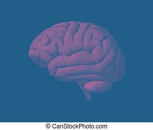 rose, gravure, bg, illustration, cerveau, vert, vue côté