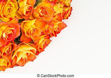 Rose greeting on white