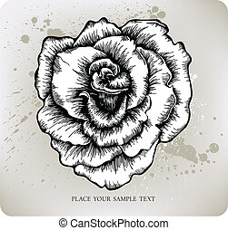 Rose, hand-drawing. Vector illustra