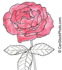 Rose. Hand-drawn flower. Real watercolor drawing. Vector illustration.