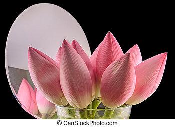 rose, haut, nelumbo, nucifera, devant, isolé, arrière-plan., noir, miroir, fin, fleurs