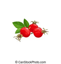 Rose hip fruits icon, berries food of farm garden - Rose hip...