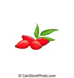 Rose hip fruits or berries icon, food from farm garden and forest, vector. Rosehip fruits, rose hip or hep haw ripe harvest for jam or juice package, natural food ingredient and dessert berries