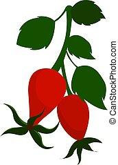 Rose hip, illustration, vector on white background.