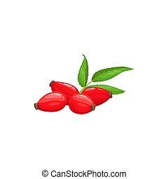 Red rose hip rosehip, green leaves isolated realistic food dessert. Vector rosehip or hep haw harvest, ripe fruits, farm garden, wild forest food. Jam, yogurt or juice package label, natural dessert