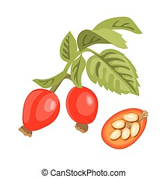 Rose hip twig with leaves, berries and seeds. dogrose or ...