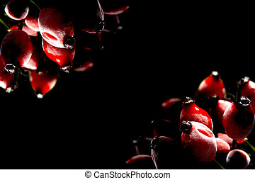 Red frosted rose hips on a black background
