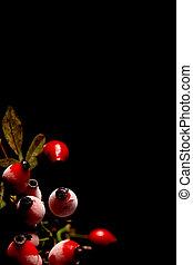 Rose hips - Red frosted rose hips on a black background