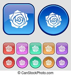 rose icon sign. A set of twelve vintage buttons for your design. Vector