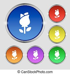 rose icon sign. Round symbol on bright colourful buttons. Vector