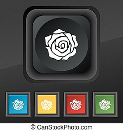 rose icon symbol. Set of five colorful, stylish buttons on black texture for your design. Vector