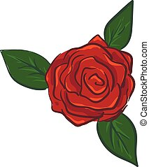 Rose illustration vector on white background