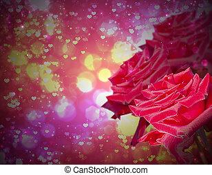 Rose in dark background