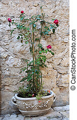 Rose in old stone vase
