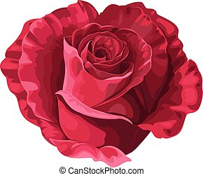 Rose in the shape of heart