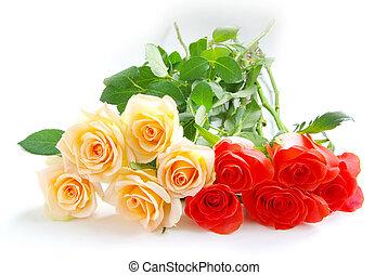 rose isolated on white background