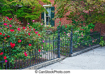 rose, jardin, et, porte fer