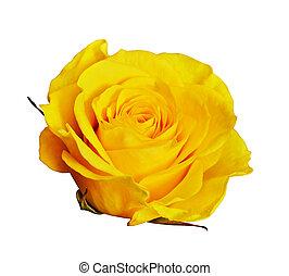 rose, jaune