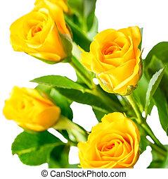 nature rose papier peint briar jaune buisson fond fleurs. Black Bedroom Furniture Sets. Home Design Ideas