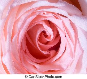 rose kronblade