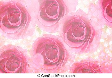 rose kwam op, bokeh., licht