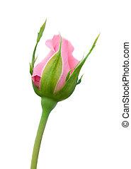 rose kwam op, mooi
