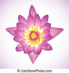rose, lotus, vecteur, flower., illustration
