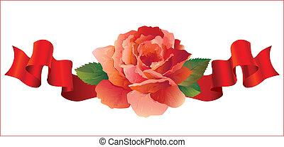 rose, mit, bänder