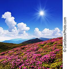 rose, montagnes, fleurs, clairière