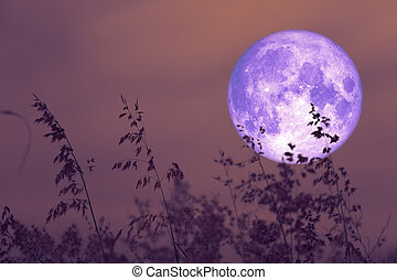 rose moon on night sky back over silhouette grass
