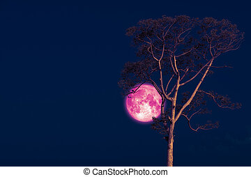 rose moon on night sky back over silhouette tree